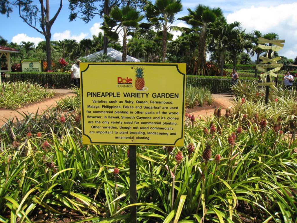 Variety Garden