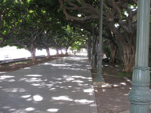 運河沿いの歩道-3